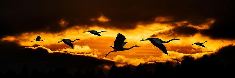 ציפורים, חופש